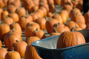 pumpkins-main_Full