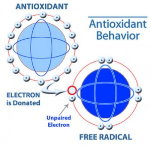 antioxidant-protecting-cell